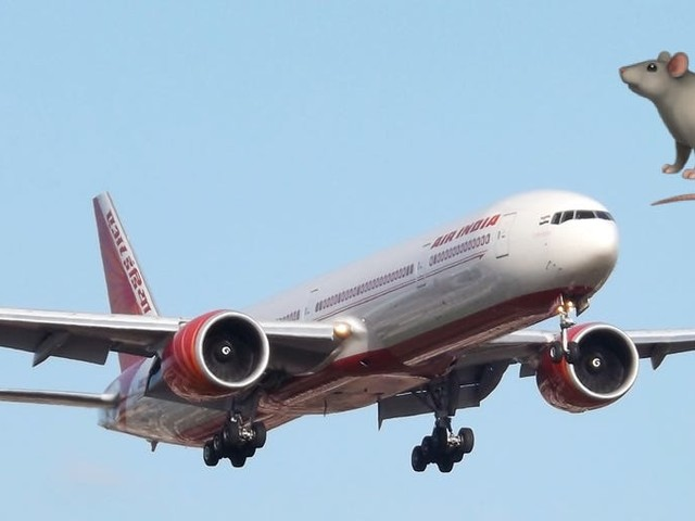 An Air India flight was delayed nearly 12 hours after a stowaway rat was spotted in the cabin