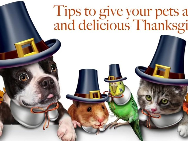 To share or not to share? Tips to give your pets a safe and delicious Thanksgiving