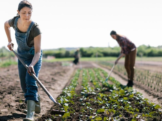 USDA says it'll continue to fight to pay off loans for Black farmers despite lawsuit on behalf of white farmers