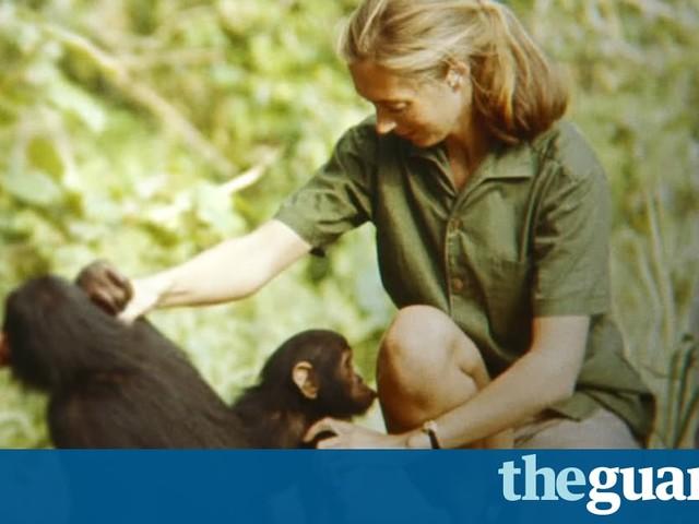 Jane review – wondrous footage lights up Goodall's Tarzan dream