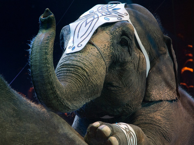 Circuses Banned From Using Elephants In New York State