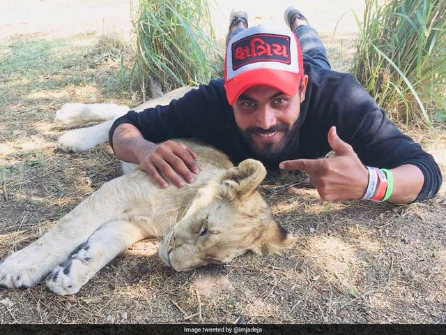 Jadeja Visits Wildlife Sanctuary In SA, Posts Picture With A Lion