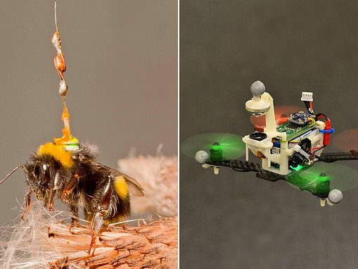 Tiny antennae that record how bees navigate may help perfect steering for driverless cars and drones