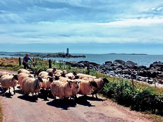 Pic of the Week: Inishbofin Island, Ireland