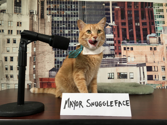 """City Hall Becomes """"Kitty Hall"""" For Adopt-a-Shelter-Cat Month"""