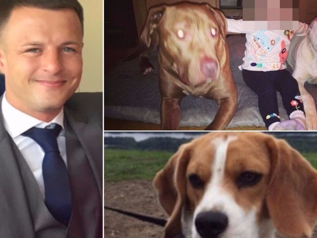 Devastated owner of dogs who mauled defenceless beagle to death speaks for the first time