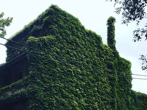 Is this Australia's creepiest home? North Sydney terrace overgrown with ivy called Jumanji house