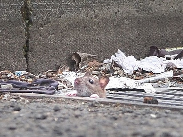 There's a rat infestation at this shabby shopping precinct