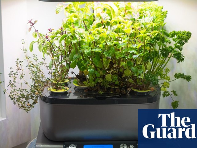 What's the best way to grow hydroponic herbs?