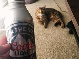 My liberal family disowned me for supporting Trump, so I'm spending Thanksgiving with my three loves: American beer, kitty, and The_Donald!
