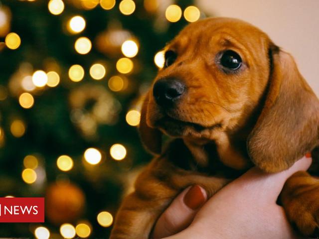 Christmas pet adoption ban at German shelters