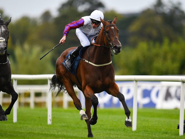 Top filly Laurens heads a field of 14 for Saturday's Lockinge Stakes at Newbury
