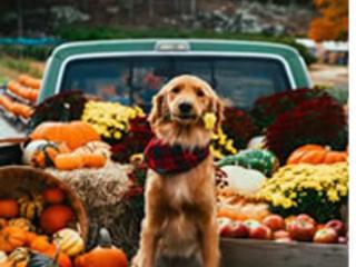 Watch Thanksgiving Dog Show