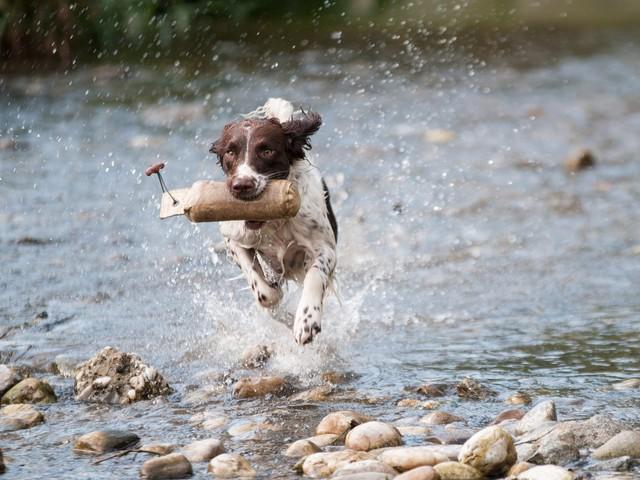 App News Rewind: Dog Days of August Arrive With Big Apple News