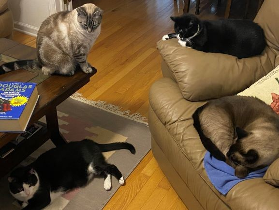 Guest Story – Furrtastic Four Report: The Covert Cats of NACHO