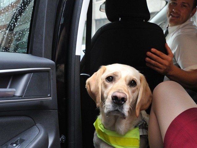 Why Is The Government Still Failing To Protect Assistance Dog Owners From Frequent Taxi And Minicab Refusals?