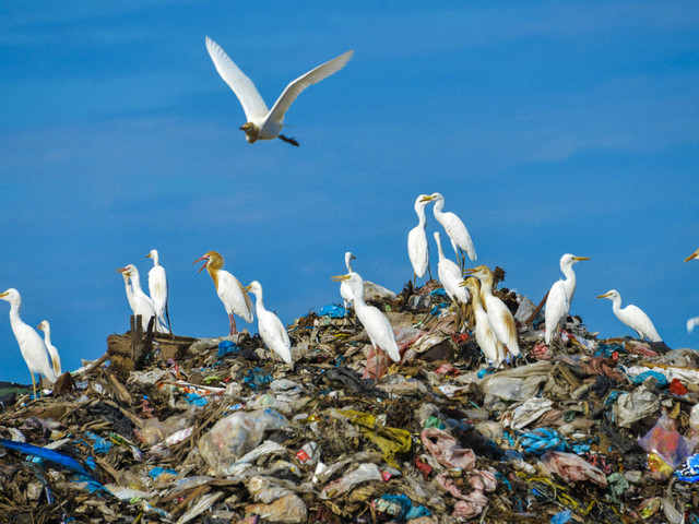 How the 'circular economy' could save the planet