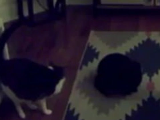 He Thinks He Has A Ghost In His House. Does This Video Prove Him Right?