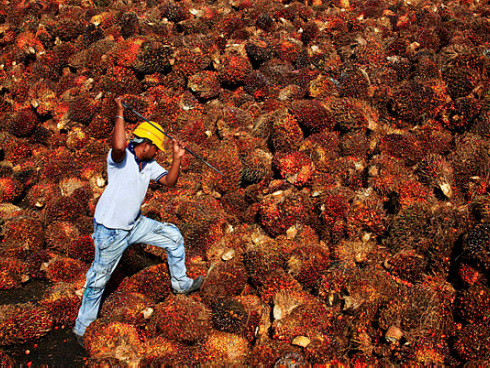 Proposed committee proves Malaysia's resolve to combat anti-palm oil campaign