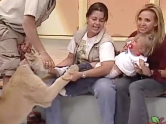 A Lion Grabbed Her Baby On Live TV. What The Handler Told Mom To Do Sounds Insane.