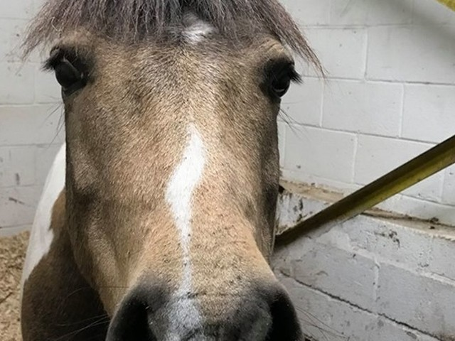 Pony slashed with knife at Bristol riding centre for people with disabilities