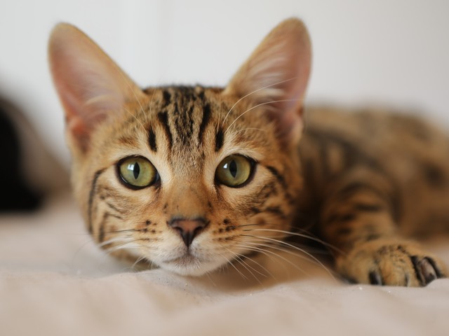 Top Tips to Prevent Cat Separation Anxiety After the Pandemic