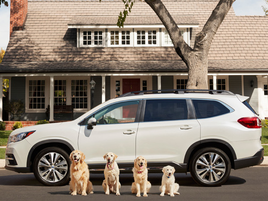 Subaru's Adorable Dogs are Back in New Commercials