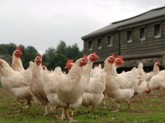 Days of £3 chicken are 'coming to an end', warns UK's poultry firm boss