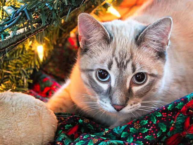The Importance Of Protecting Your Pets From Christmas Dangers