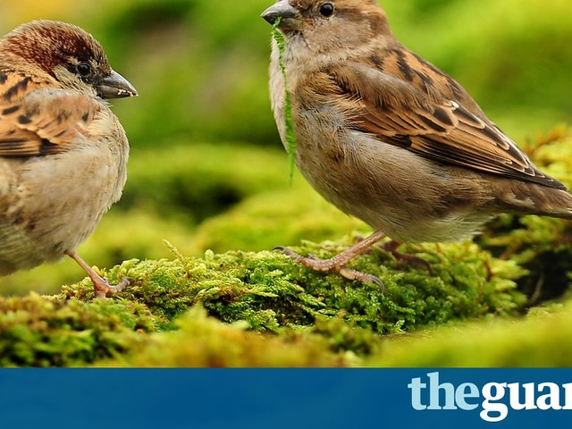 Farmland bird decline prompts renewed calls for agriculture overhaul