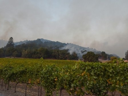 Green vineyards stand out in black of California fires