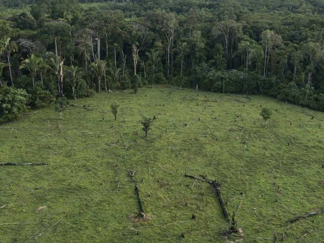 How satellite sleuths are helping to save the Amazon from destruction