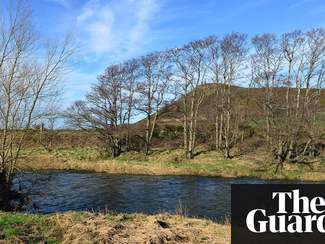 Country diary: a glimpse of spring down by the river Ystwyth