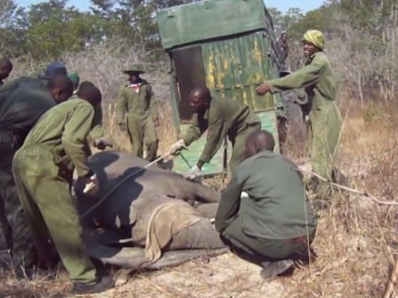 What's Happening In Zimbabwe Is A Heartbreaking Animal Rights Violation