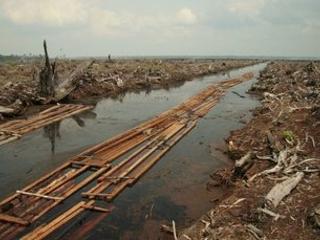 'Wake up call': Halting nature destruction key to avoiding pandemics, UN report finds