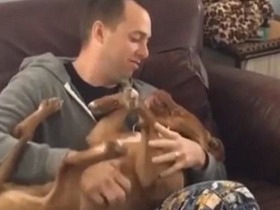This Pit Bull Isn't Into PDA And Also Isn't Afraid To Let His Human Know It