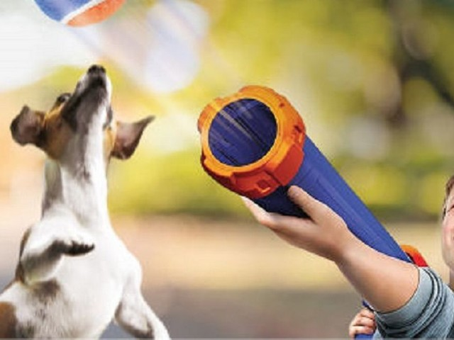 Aldi Nerf gun for dog walkers sure to score as poll finds Newcastle dogs are the most pampered in England