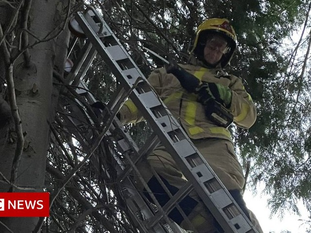 Cat grounded after three days stuck in Market Drayton tree