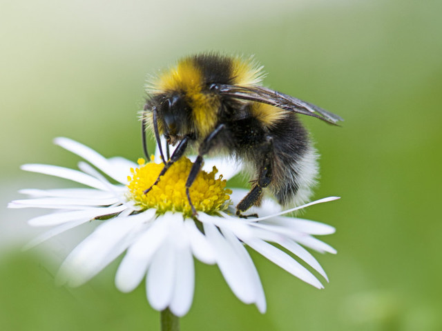 How To Turn Your Balcony Or Garden Into A Bee Haven This Spring
