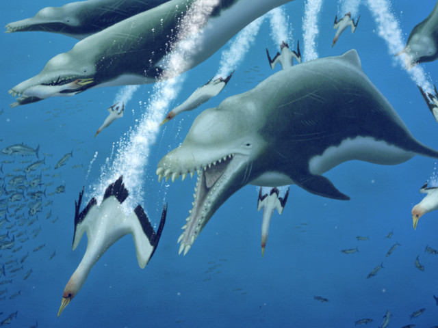 Massive extinct dolphin was an apex predator with whale-like features - CNET