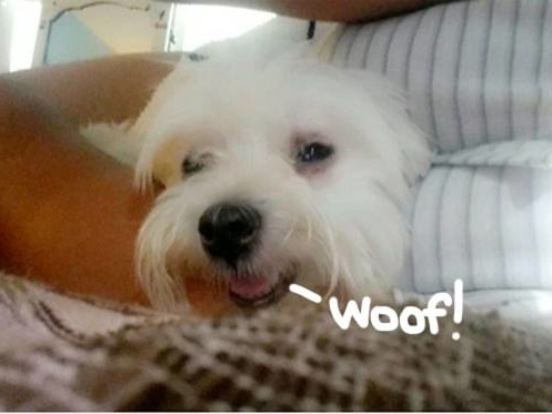 Worst Tinder Date Ever Allegedly Steals Dog From Home!