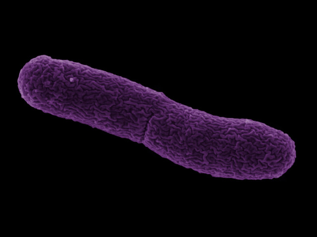 Mobile DNA element found in mosquito parasite has potential for infectious disease control