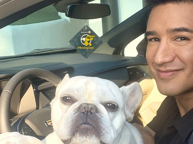 Mario Lopez 'Cannot Imagine' Life Without His French Bulldogs Julio and Juanita
