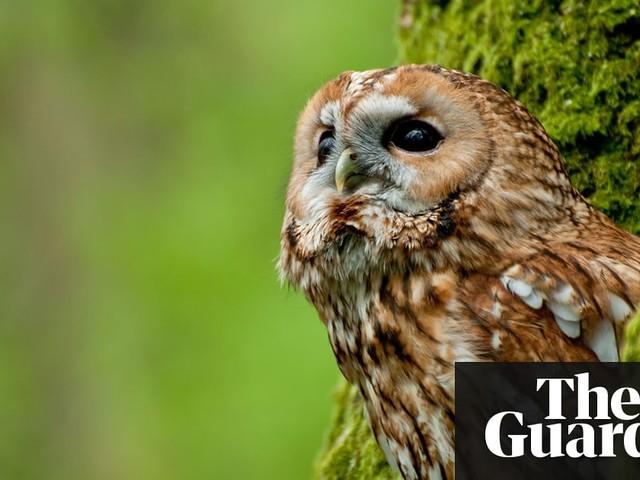 Owl Sense by Miriam Darlington – review
