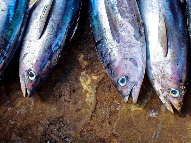 Here's why your sustainable tuna is also unsustainable