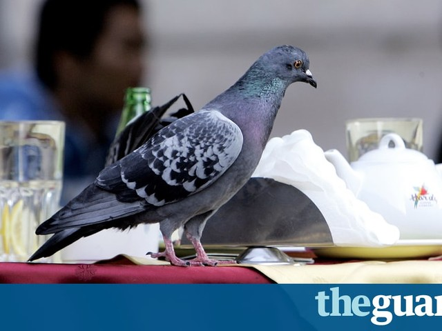 World Pollutionwatch: evidence grows of lifelong harm from polluted air