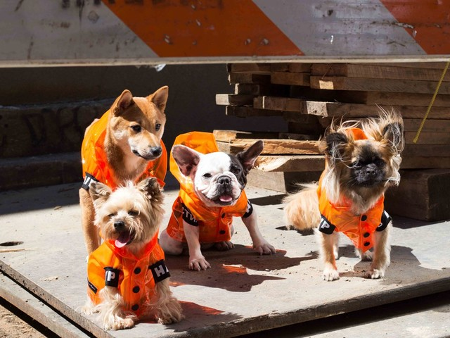 Hypedogs are here: the rise of puppy streetwear