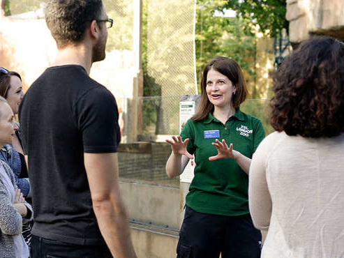 London Zoo offering animal tours with afternoon teas