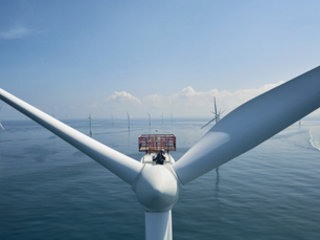 Energy White Paper: The green economy reacts