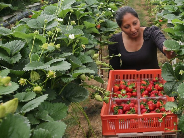 New PM 'should lower migrant worker salary threshold'